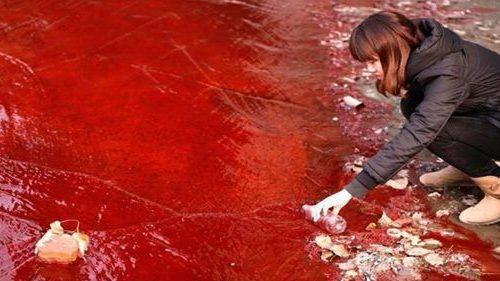 Depurazione di acque reflue  colorate con biomasse  fungine inattivate